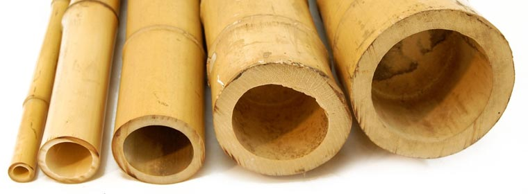 Spinazz canna di bamb for Canne di bambu per pergolati